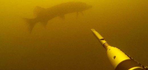 Подводная охота в мутняке