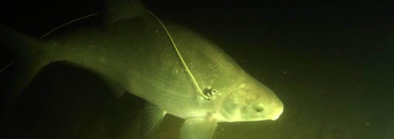 Подводная охота в Волгореченске