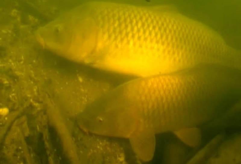 Зимняя подводная охота
