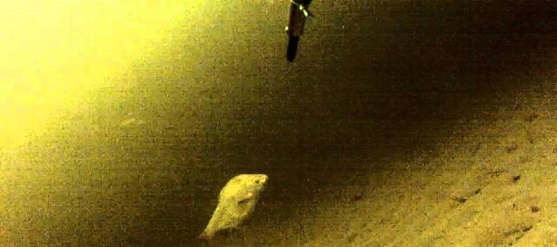 Подводная охота на Волге в феврале