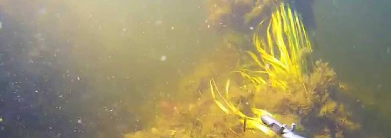 Подводная охота на толстолобика р. Волга