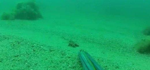 Подводная охота на Черном море в мае
