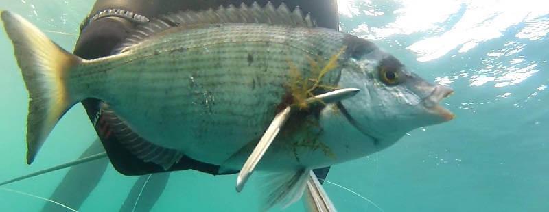 Подводная охота на Черном море в мае 2014
