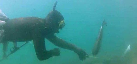 Подводная охота на Черном море весной