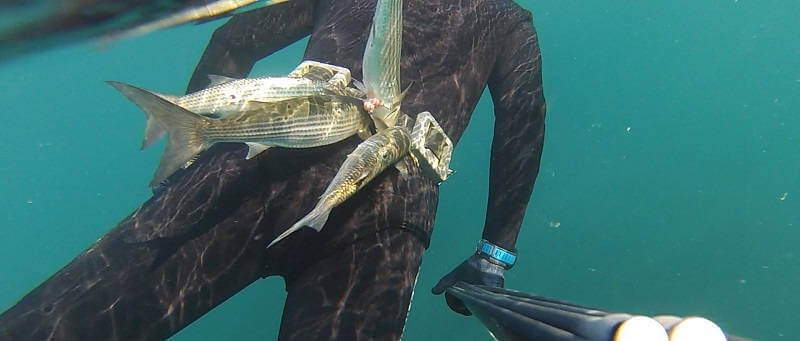 Подводная охота на Крымском побережье