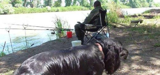 Рыбалка на реке Кубань весной