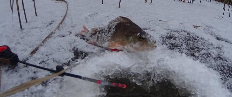 Зимняя рыбалка под новый год