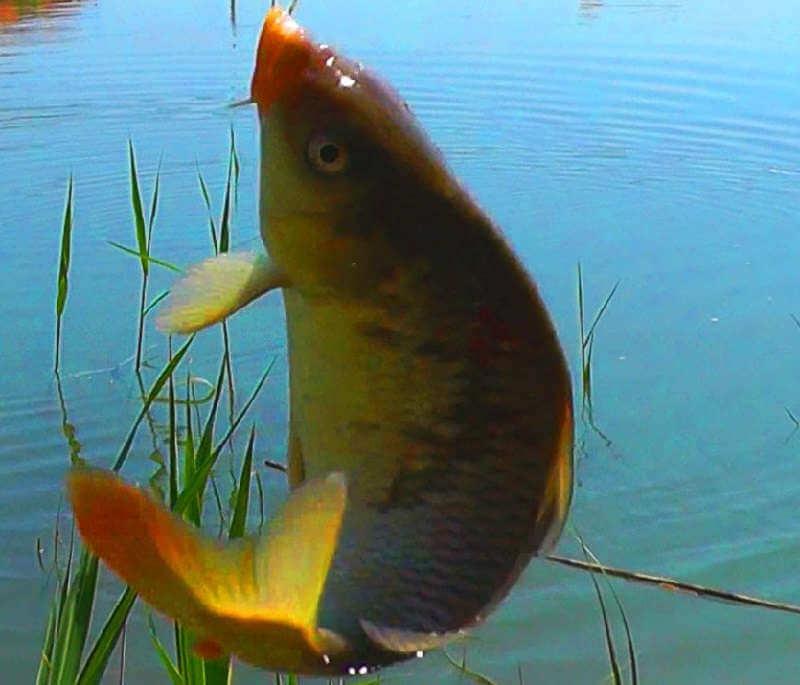 Рыбалка на озере на поплавочную удочку