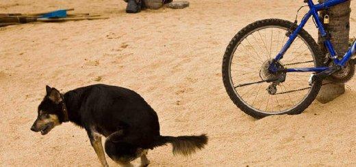 За что штрафуют владельцев собак