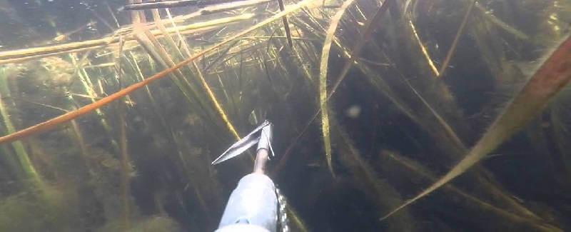 Выстрелы на подводной охоте