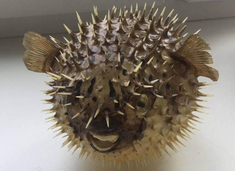 Чучело из рыбы