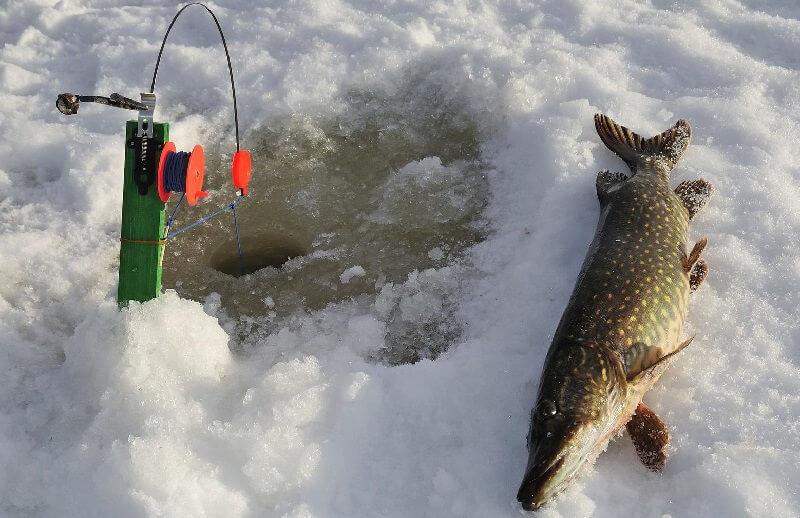 Ловля щуки зимой на Алтае