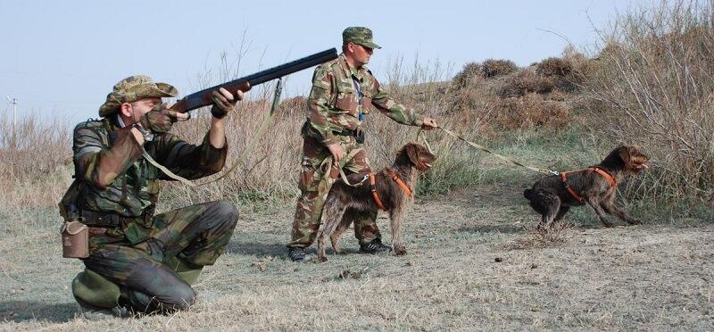 Охота на фазана с собакой