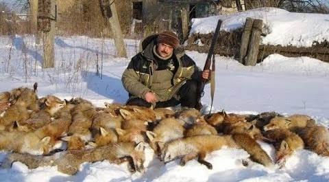 Охота на лис зимой