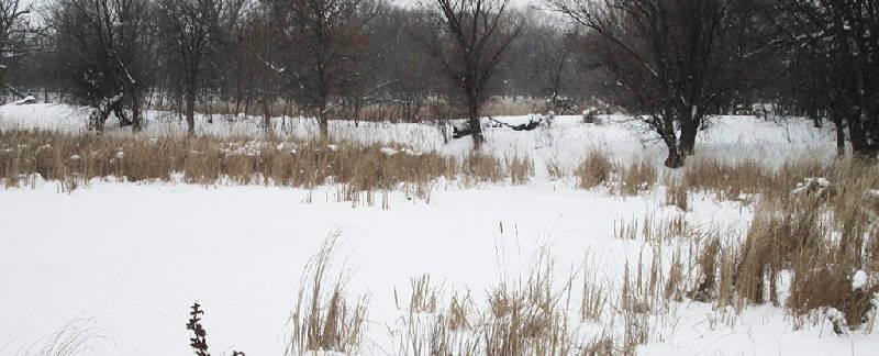 Охота на зайца русака зимой