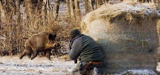 Как охотиться на кабана
