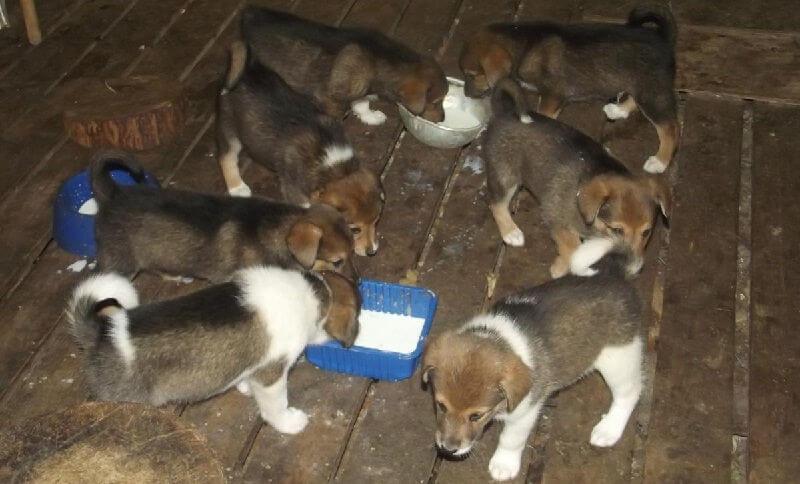 Покупка собаки в Москве