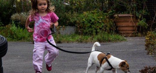 Как выбрать ребенку собаку