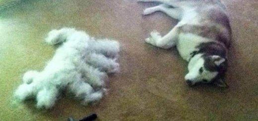 Вяжем из шерсти собак