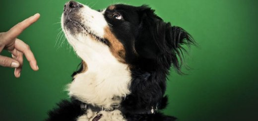 Как обучить щенка команде «место»