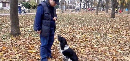 Рекомендации по дрессировке собак