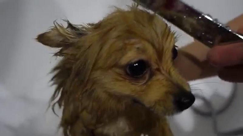 Как часто нужно мыть собаку