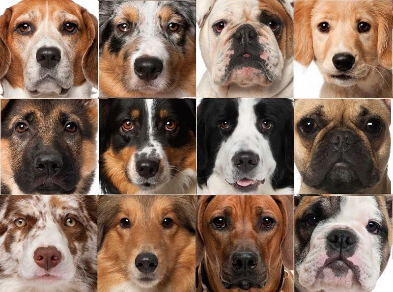 Выбор породы собак