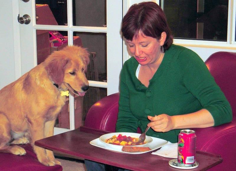 Как отучить собаку клянчить еду со стола