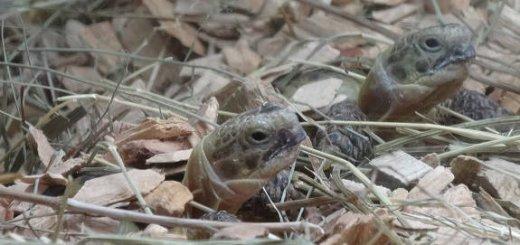 Содержание рептилий