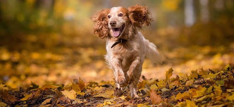 Информация о собаках