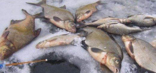 Коллективная рыбалка