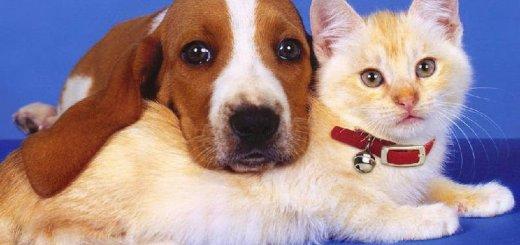Кошка или собака?