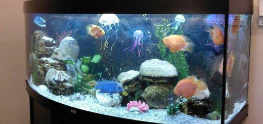 Аквариум для медуз