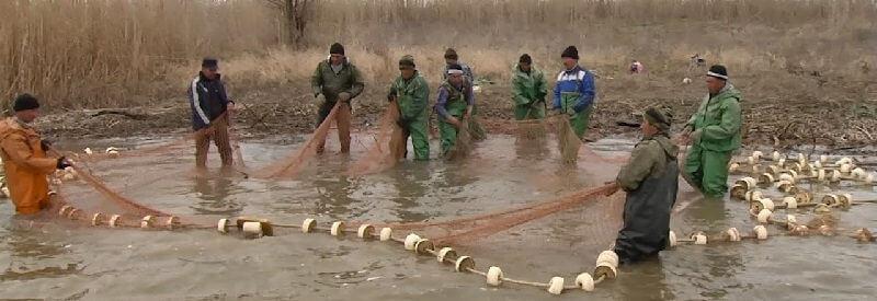 Браконьерские уловы в Сахалинской области