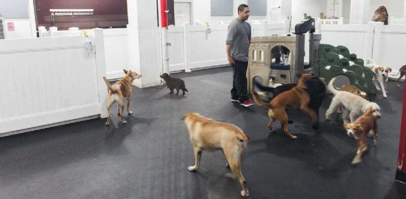 Гостиницы для собак класса люкс