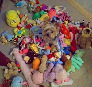 Сколько игрушек нужно собаке?