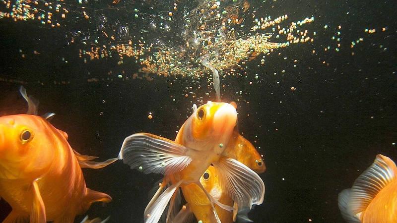 Как кормить рыбок в домашних условиях 492