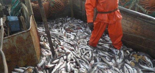 Квоты на добычу рыбы