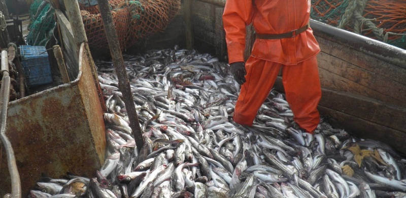 Таким образом, последняя редакция федерального закона о любительском рыболовстве в годах устанавливает некоторые четкие правила осуществления вылова рыбы.