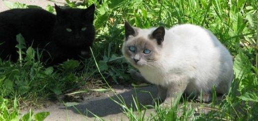 Найти общий язык с кошкой