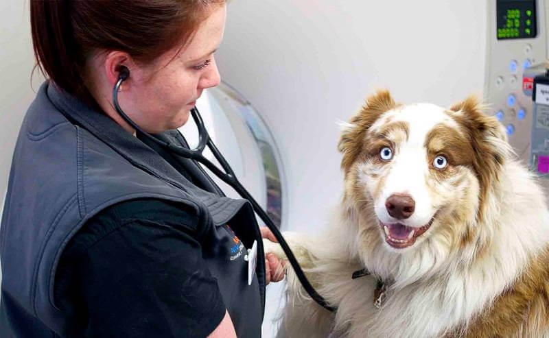 Питомцы и ветеринария