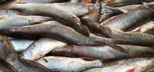 Рыбохозяйственная инфраструктура Азово-Черноморского бассейна