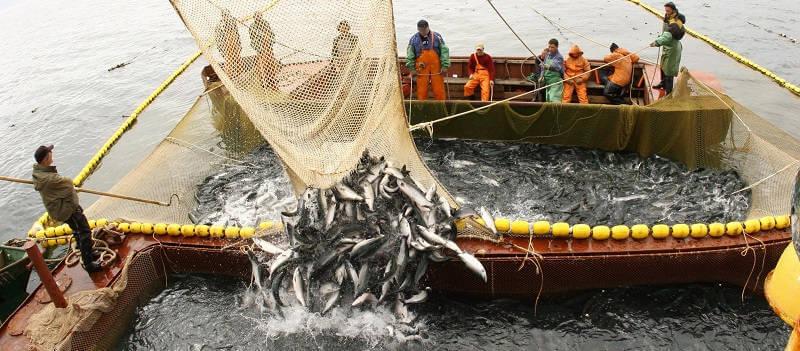 Рыбопромысловики Дальнего Востока