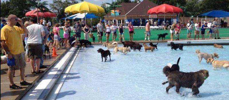 Собачий аквапарк