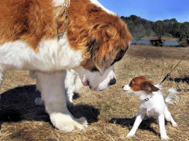 Почему большая собака лучше маленькой