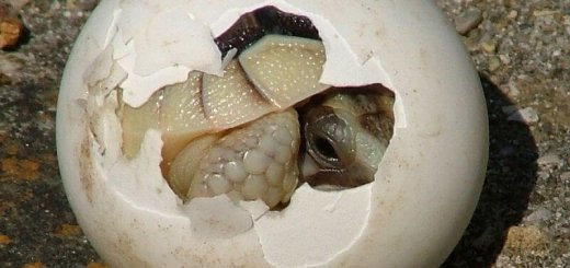 Оболочка яиц животных