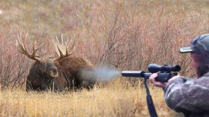 Отстрел лосей