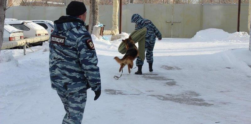 Овчарки в полиции
