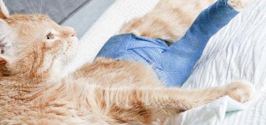 Вывихи у кошек