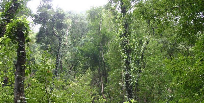 Жестколистный лес